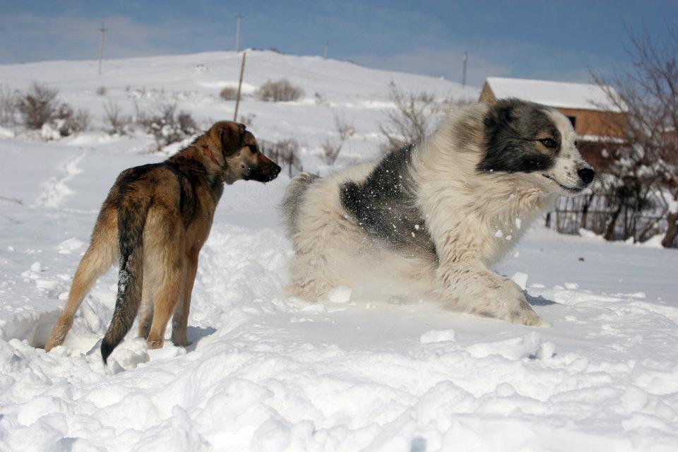 Две собаки в глубоком снеге
