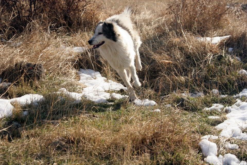 Собака бежит через поле