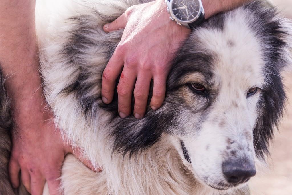Собака крупным планом и руки человека