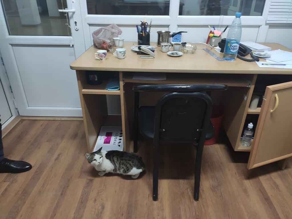 Кошка в администрации Мартакерта