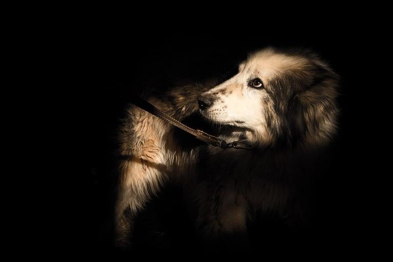 Собака стоит в луче света