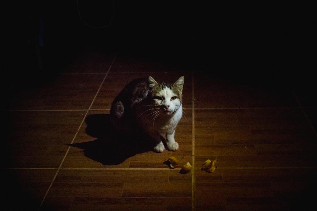 Кошка в Мартакерте
